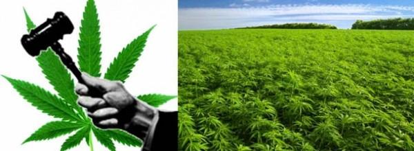 Vrhovni sud Republike Hrvatske: Marihuana je lijek! Pravnici humaniji od lakomih zdravstvenika